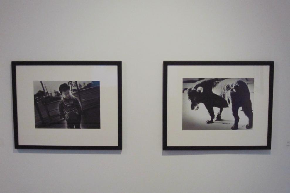 Boy with Squint, 1971, Gelatin silver print, 24.2 x 34.9cm & Stray Dog, 1971, Gelatin silver print, 25.8 x 35.5cm (by Daido Moriyama)