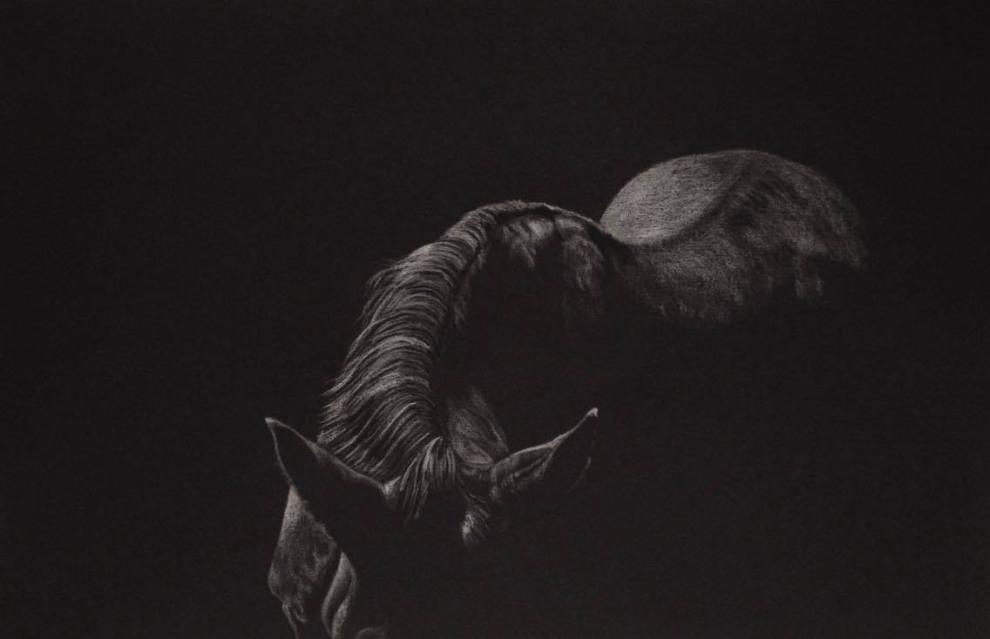 Equus Caballus by Alison Tubritt